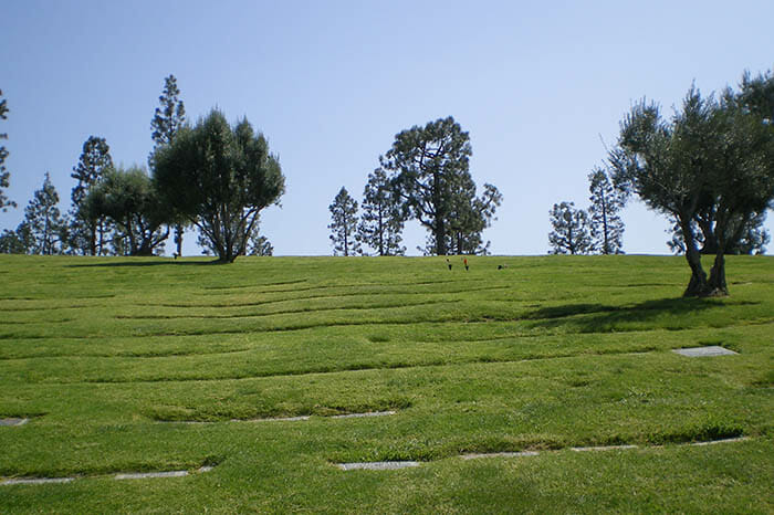 Lawn landscape at Mount Sinai Hollywood Hills